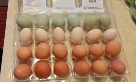 Cage-Free, Free-Range, Pasture-Raised Or Organic Eggs: An Egg-ucation